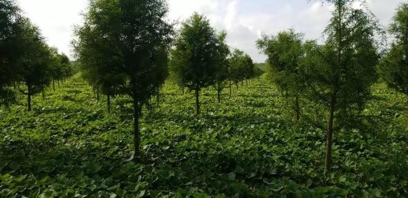 江苏明年计划新增造林35万亩以上