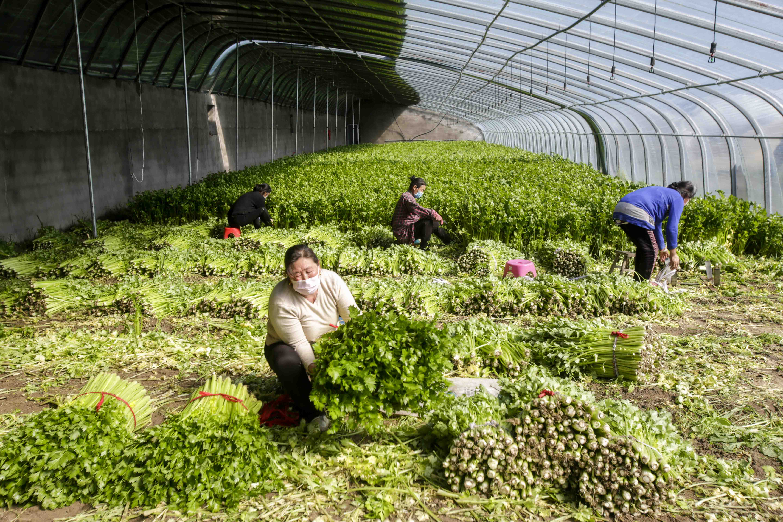 最是一年春好处,徐州市用新媒体方式助种养大户复工复产
