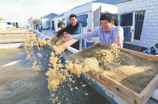 江苏射阳:品牌农业旺了产业富了